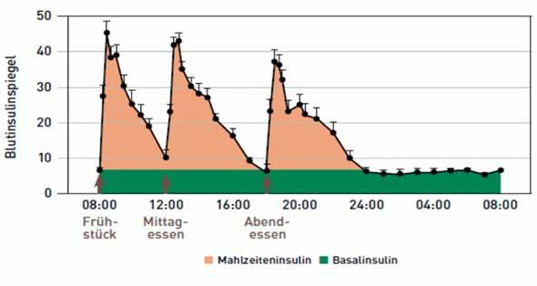 Schematische Darstellung der basalen und prandialen Insulinfreisetzung zu den Mahlzeiten aus den Betazellen der Bauchspeicheldrüse bei einem Gesunden.  Quelle modifiziert nach Kruszynska YT et al.: Basal and 24-h C-peptide and insulin secretion rate in normal man. Diabetologia. 1987; 30:16–21.